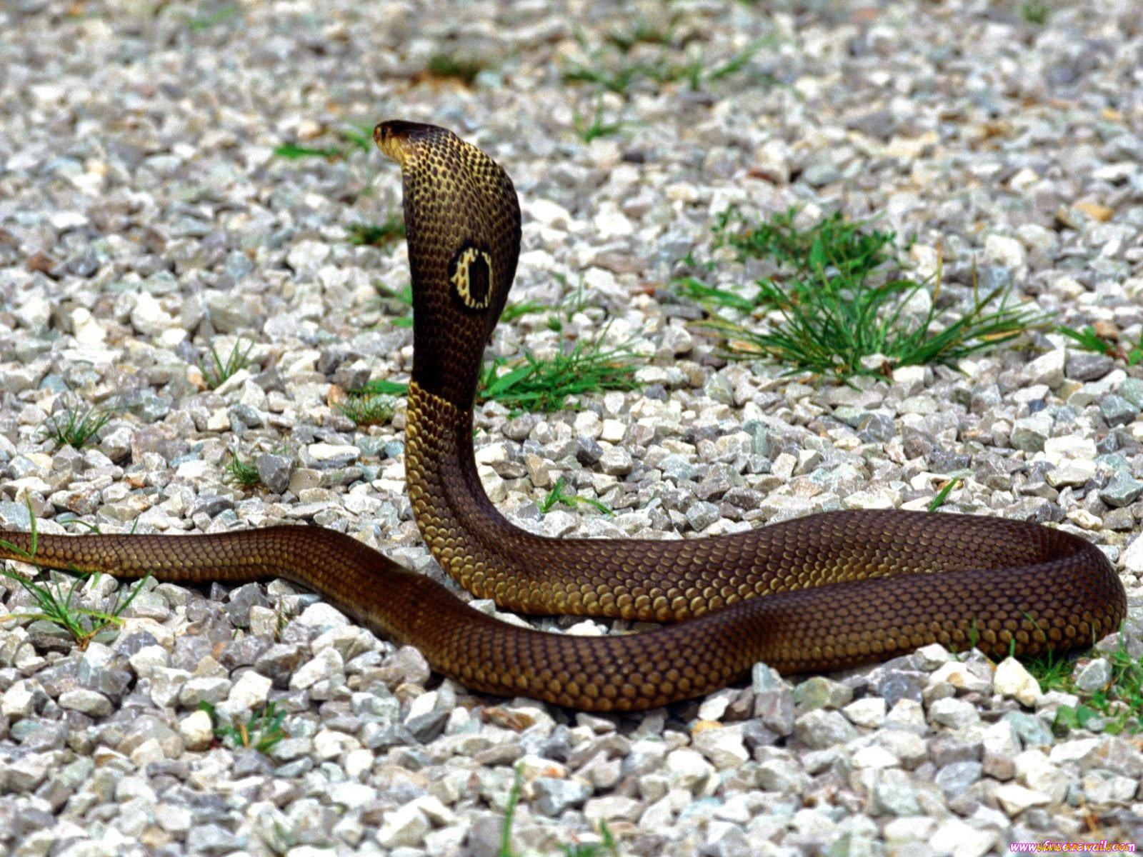 названия змей с фотографиями фото после лечения